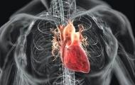 Влияние фитнесса на сердце: польза или вред?